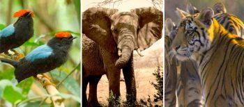 Día Mundial del Medio Ambiente: Historias para entender nuestra biodiversidad